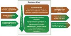 bf_imagefocus_sur_l-039;agroecologie.jpg