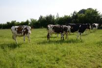 image vaches_patures.jpg (4.9MB)