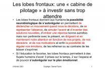 image lobes_frontaux.jpeg (0.1MB)